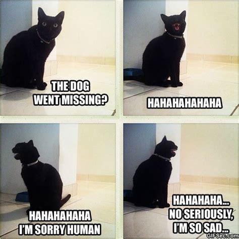 Sad Cat Meme - meme sad cat