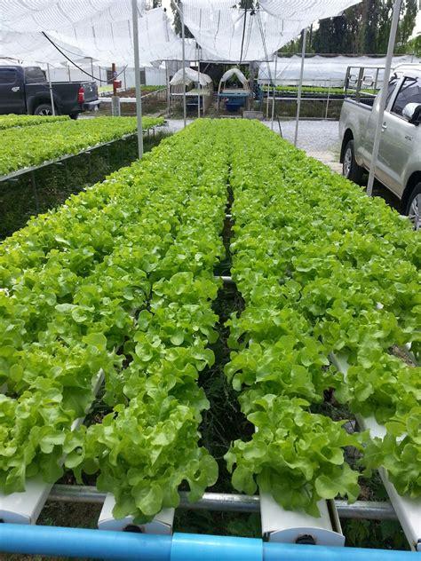 Hydroponics:ความรู้เบื้องต้นเกี่ยวกับการปลูกพืชไร้ดิน