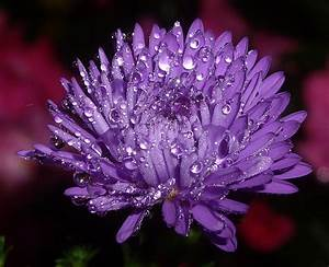 Colorful Flower with Raindrops