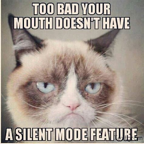 Middle Finger Cat Meme - 618 best images about classy sassy a bit smart assy on pinterest funny middle