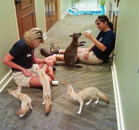 reasons zookeepers    job   world
