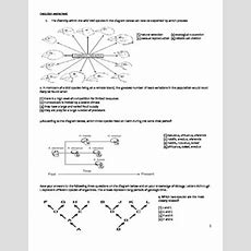 High School Biology Worksheet  Evolution By Educator Super Store