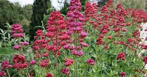 Blühende Pflanzen Winterhart : dauerbl her unter den stauden mein sch ner garten ~ Michelbontemps.com Haus und Dekorationen