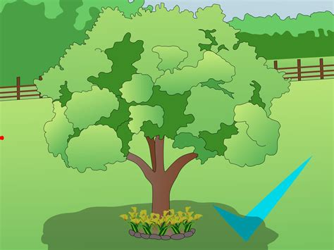 how to plant trees how to choose where to plant trees 6 steps with pictures