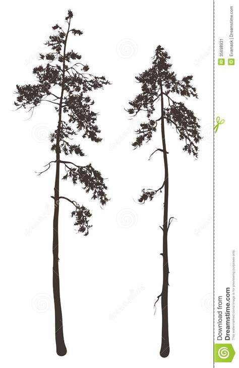 tall thin trees clipart   cliparts  images