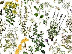 The 25+ best Botanical wallpaper ideas on Pinterest ...