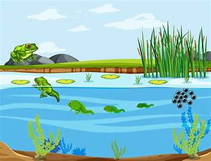Frog Life Cycle Diagram