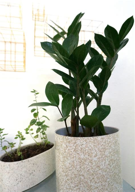 contemporary indoor plants modern house plants modern house