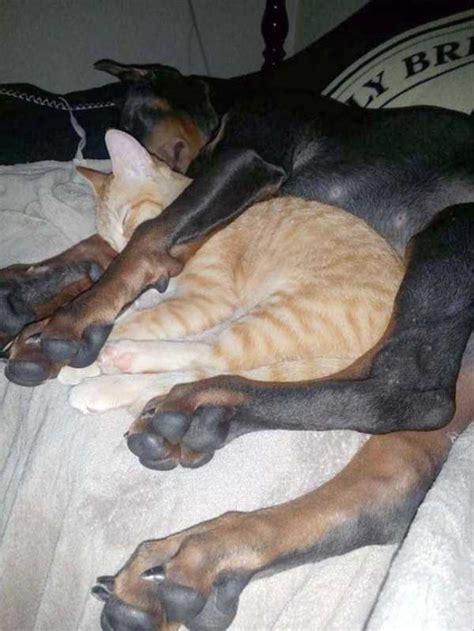 exhausted   adorable animals   klykercom