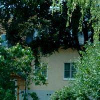 bäume als sichtschutz gemeinde haringsee haringsee