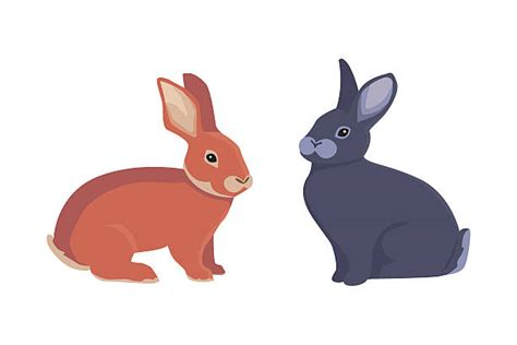 Top 60 Hare Clip Art, Vector Graphics And Illustrations