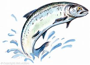 Jumping Salmon Drawing | www.pixshark.com - Images ...