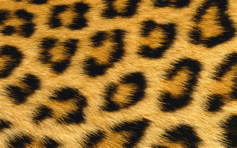 Animal Skin Wallpaper - 1440x900 leopard skin desktop pc and mac wallpaper
