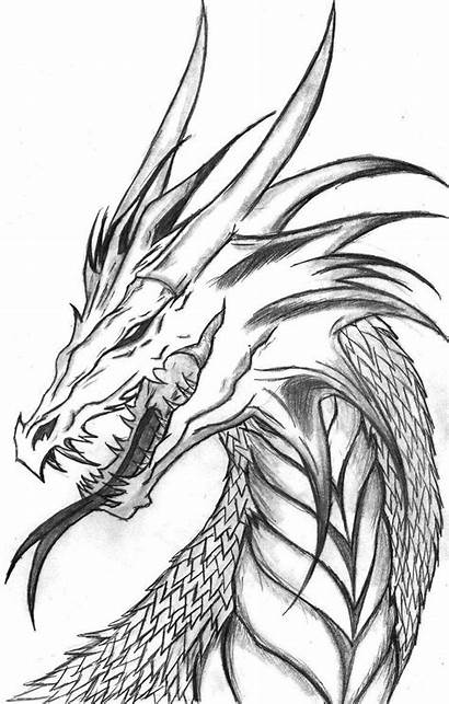Dragon Drawings Drawing Pencil Realistic Coloring Head