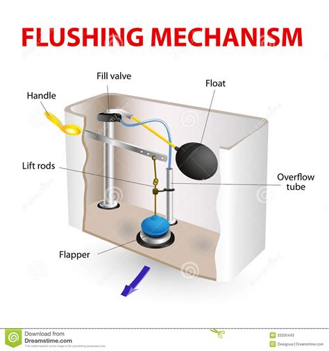 to flush the toilet flushing mechanism flush toilet stock vector image 33200443