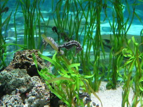 Characteristics, Reproduction, Habitat And More