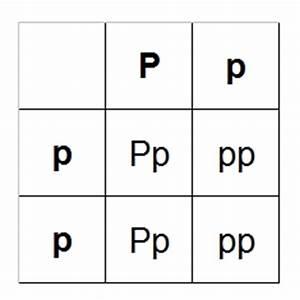 The Periodic Table Of Pythons Genetics 101