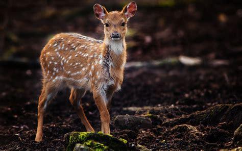 Beautiful Animal Deer in Jungle Pics | HD Wallpapers