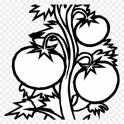 Clipart Plant Roots Seedling Tomatoes Webstockreview Plants