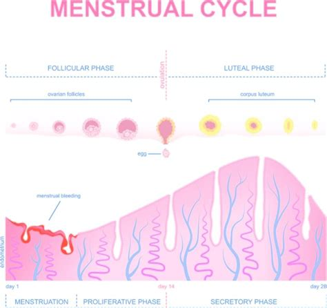 implantation blood color implantation bleeding can be treated findatopdoc