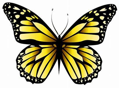 Butterfly Yellow Transparent Butterflies Clipart Clip Background