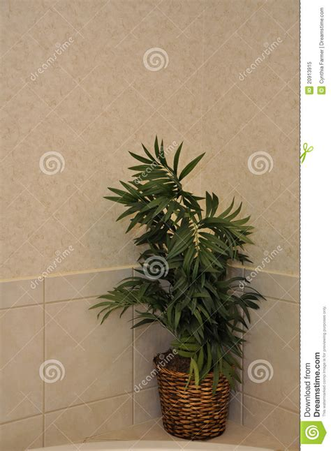 artificial plants for the bathroom artificial plant in modern bathroom royalty free stock
