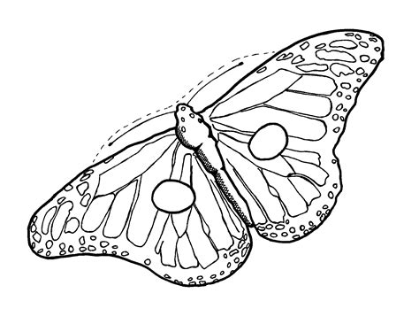 butterfly wing outline   clip art