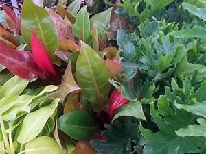 Denver, Houseplants, U0026, Indoor, Plants