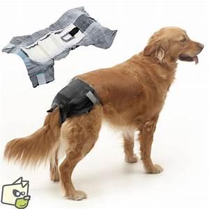 Video Pour Chien : couche urinaire pour chien et chienne incontinent ~ Medecine-chirurgie-esthetiques.com Avis de Voitures