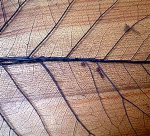 Stock Texture - Leaf Veins I by rockgem on DeviantArt