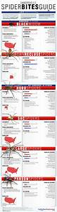 Spider Chart Ultimate  Know Which Spiders Live Near You