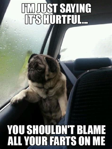 Funny Dog Pictures Memes - funny pug jokes the best of quot introspective pug quot memes humorsharing com its hailey and