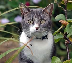 severe cat allergies jab to cure cat allergies begins clinical trial daily