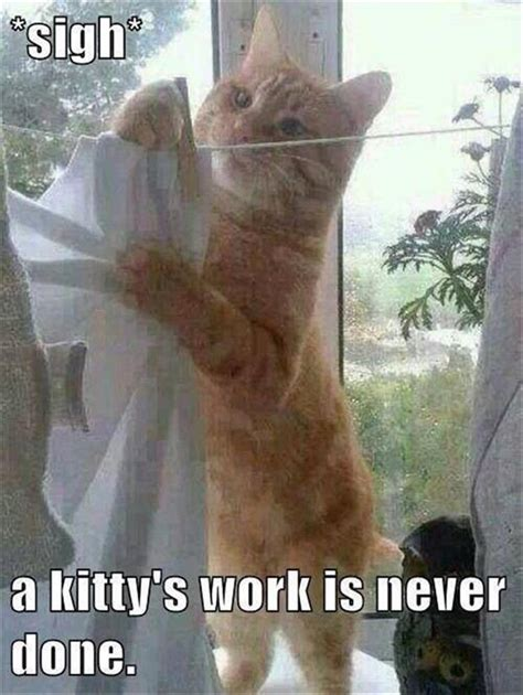 funny animal pictures   day  pics daily lol pics