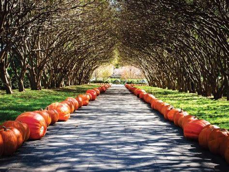 pumpkins   dallas arboretum hgtv