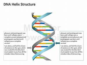 Dna Helix Structure  Editable Ppt