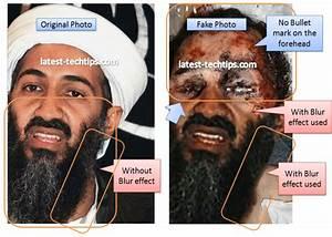 The Osama Bin Laden Tangled Web