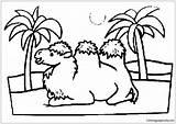 Caravan Camel Clipart Pages Desert Coloring sketch template