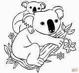 Koala Coloring Pages Detailed Printable Adult Visit Bear Sheets Fox sketch template