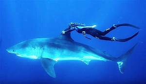 Talk Like Ted Ocean Ramsey At Ted Talks Will Change Your Perception Of