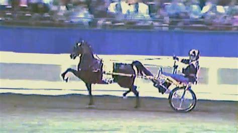 pony hackney amateur 1994 road