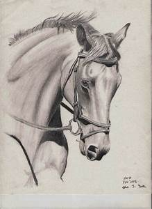 Horse Drawing by ET-Foster on DeviantArt