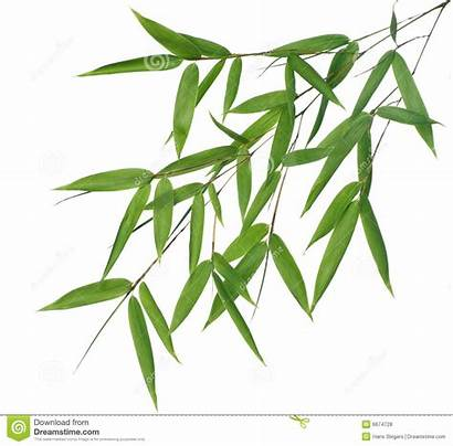 Bamboo Leaves Clipart Leaf Resolution Royalty Wet