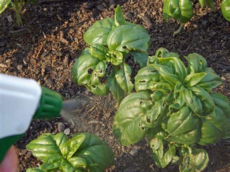 The 25+ Best Garden Bug Spray Ideas On Pinterest Pest