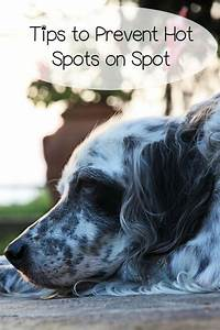 How To Prevent And Treat Hot Spots On Dogs