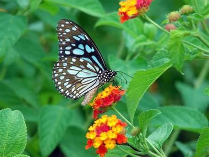Butterfly Butterflies Wallpapers Garden Amazing Nature Rainwater