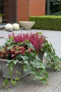 Plantes D Hiver Extérieur Balcon : top 10 des plantes pour jardini res d 39 hiver lierre ~ Nature-et-papiers.com Idées de Décoration