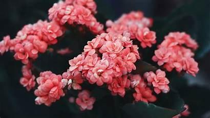 Flower Flowers Pink 4k Wild Bloom Bush
