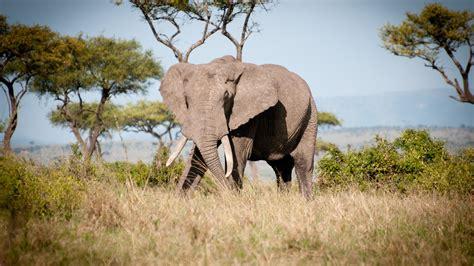 4k Animal Wallpaper - elephant ultra hd wide animal wallpapers 4k