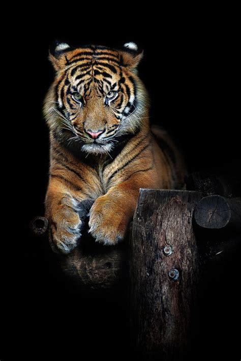 Best Images About World Wild Ferocious Animals